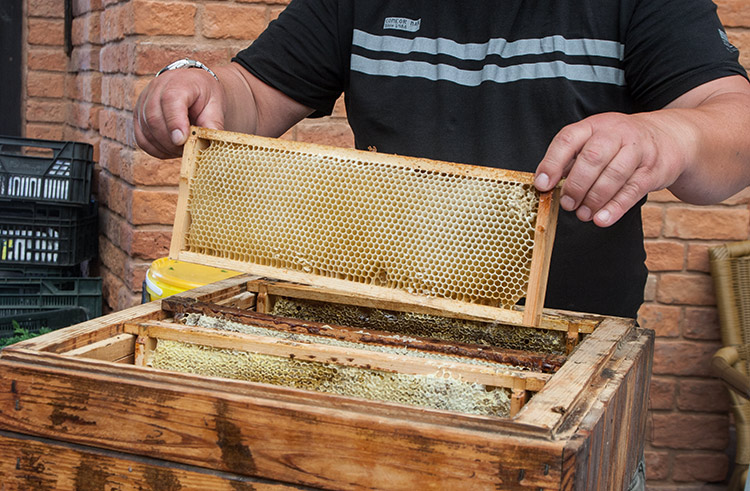 """So the bees travel around Poland looking for pollen, and I travel around Poland looking for the bees."" When he's not chasing bees in his Land Rover, find Darek vending pots of honey and trading anecdotes: ""did you know,"" he asks, ""beeswax was the original chewing gum of the ancients – here you go, try some."""